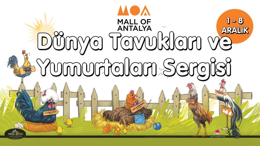 Dünya Tavukları ve Yumurtaları Mall of Antalya'da!
