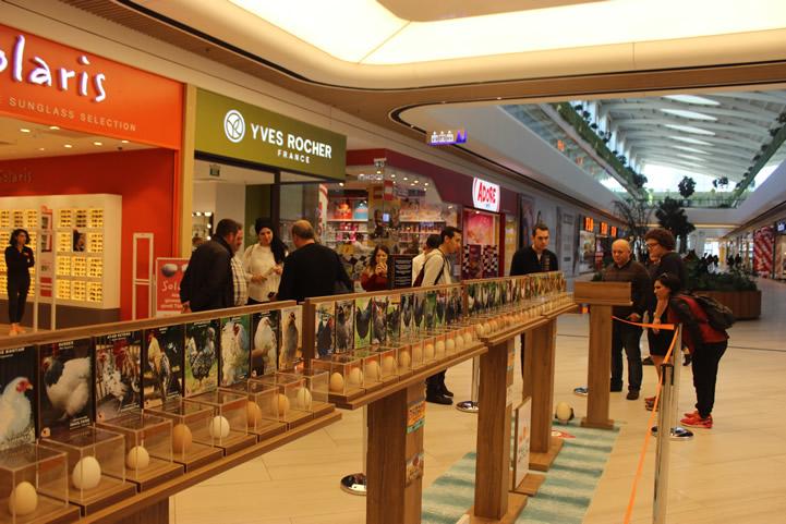 Mall of Antalya Tavuk Yumurtaları Sergisi