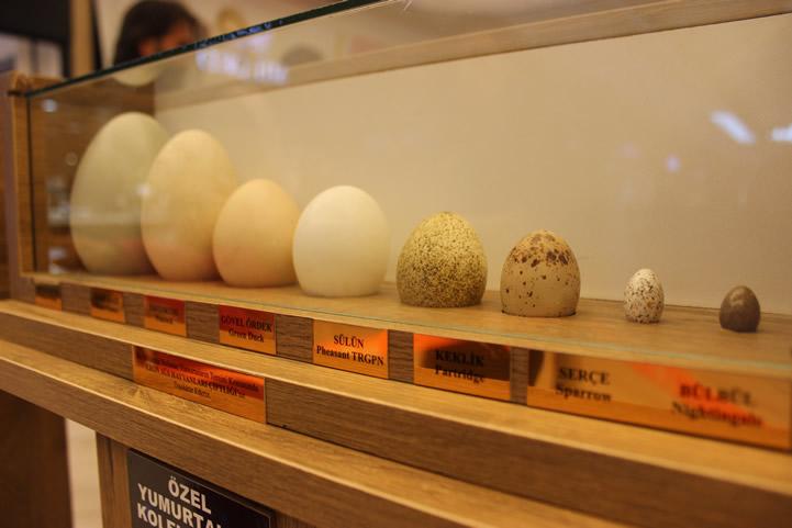 Tavuk Yumurtaları