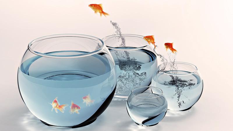 Nevruz Balık
